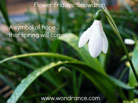 symbolism  wondrance coaching blog  page, Natural flower